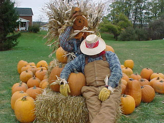 honey haven, fall festival, pumpkins, scarecrows, autumn, ashland, ohio